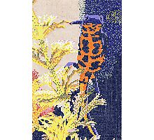 Fired Bellied Newt (2mm) Photographic Print