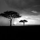 Thunderstorm at Dusk, Masai Mara by stephen foote