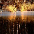 Sunny river   by Bluesrose