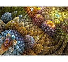 Cactus Garden Photographic Print
