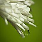 Drip-Drop by LeeAnne Emrick