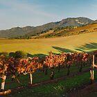 Sonoma County Vinyard by Zane Paxton