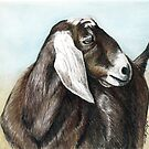 Nubian Goat Colored Pencil  by Charlotte Yealey