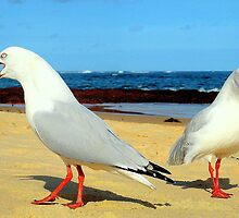 seagull squabble by geewitch