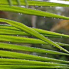 Palm frond close up by Puppy2