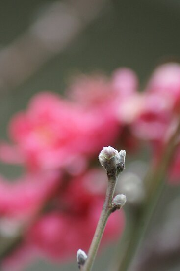 The promise of spring.  Wat Garden La Mirada, CA USA by leih2008