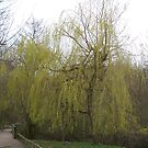Spring Willows by JJsEscape