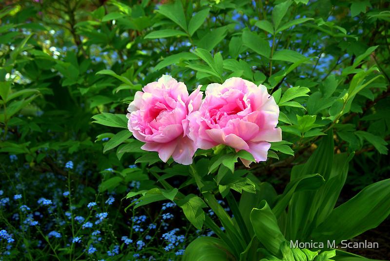A Beautiful Pair of Peonies by Monica M. Scanlan