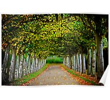 tree-lined walk 2 Poster