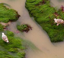 Gulls_4163 by Wayne Tucker