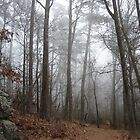 Fog Short Cut Trail - Hot Springs National Park, Arkansas by Lee Hiller