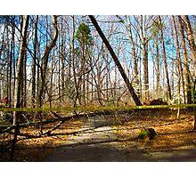 TSI:  Tree Scene Investigation Photographic Print