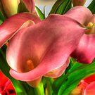 Pink Callas by Kim McClain Gregal