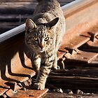 Rail Cat by Sue  Cullumber