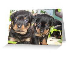 Rottweiler Puppies - Portrait Greeting Card