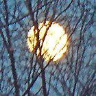 moon branches by doreen connors