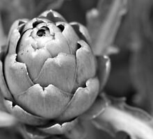 Artichoke  by lensmatter