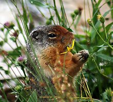 Mmmmm Tasty Flower by Bonnie Robert