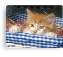 Kitty in a Basket Canvas Print