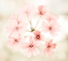 Pretty in Pink by Hilary Walker