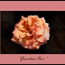 &quot; Grandmas Rose &quot; by CanyonWind