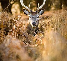 Amongst the Ferns by Peter Denness