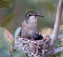 Hummingbirds Tiny Cycle of Life # 3 by Judy Grant