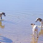 The Boys Take A Dip, Whippets in Water by Thomas Stevens
