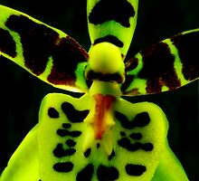 Storm Trooper - A New Perspective on Orchid Life by © Ashley Edmonds Cooke
