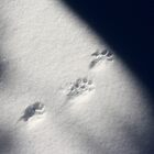 Footprints In The Snow by Forest Snowden
