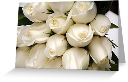white roses by OTBphotography