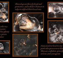 Rottweiler Temperament - Puppy Collage by taiche