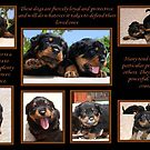 Rottweiler Memories by taiche