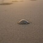 Shell. by Tom Francis