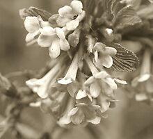 Spring Has Sprung by Jack McCallum