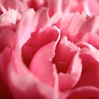 Carnation Sorbet by fabiela