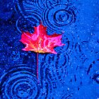In the Rain - A Maple Leaf by Sarah Beard Buckley