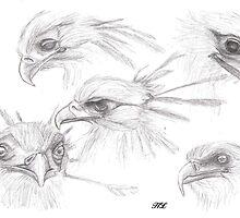secretary bird by HarukoLarsen