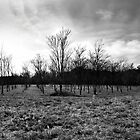 The Cold Orchard - Canton Road, Georgia by Jay72