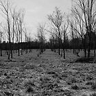 The Cold Orchard II by Jay72