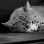 Judah's Sleep by Jay72