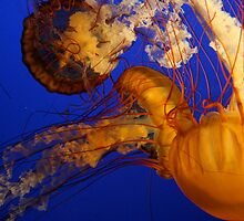 Jelly by Alice Fisher