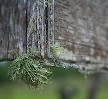 Moss on a Power Box by Randy Richards