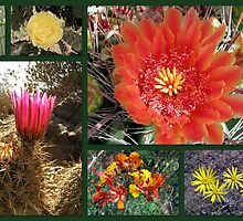 Flowers & Cacti in the Southwest by Kimberly Chadwick