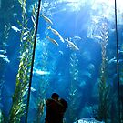 Kelp Forest by MonicaRose23