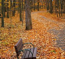Bench In A Park by snehit