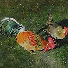 Cock & Hen by Graham Clark