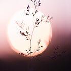 burning by Nika Seliverstova