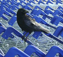 firm purchase (raven upon shopping trolleys) by armadillozenith