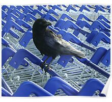 firm purchase (raven upon shopping trolleys) Poster